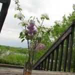 vaseoflowers